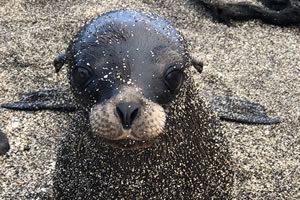 Seal - photo 1